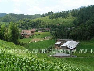 九连山原始森林度假村;; 湖南郴州乡村风景; 农村绿化美化要与农民