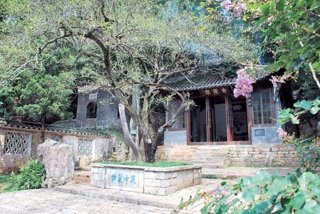 滁州市琅琊山风景区醉翁亭西侧,生长着一株老杆虬枝的古梅,为北宋